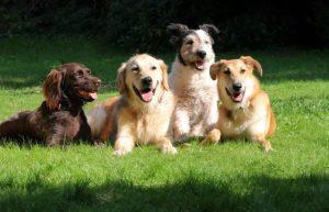 4 happy healthy puppies